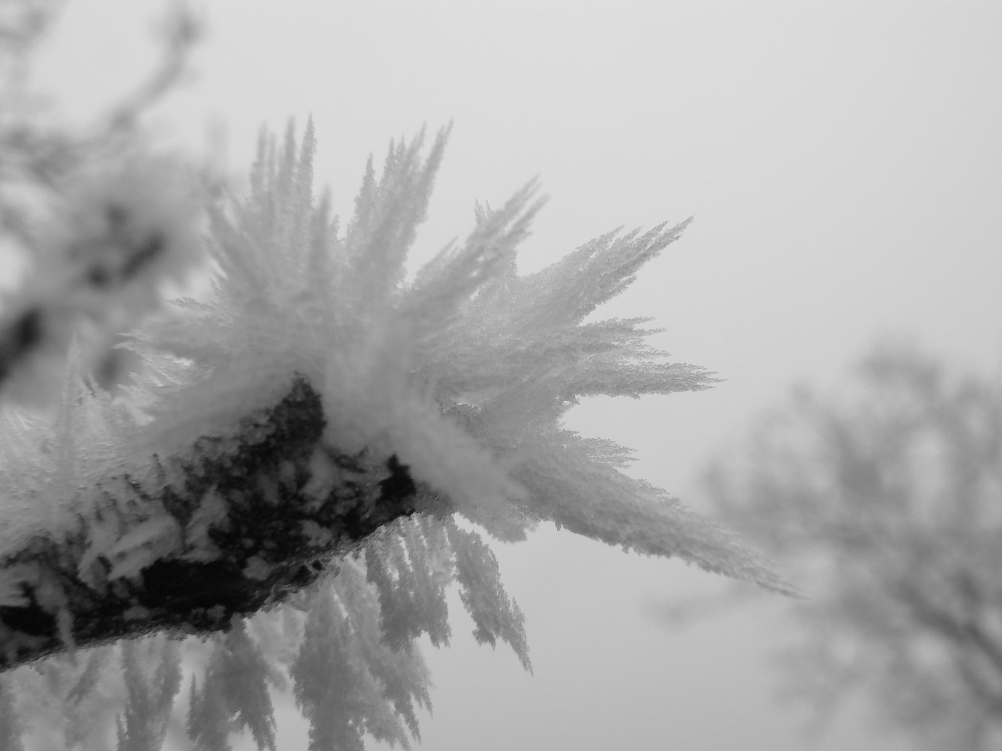 Zasněžená větvička
